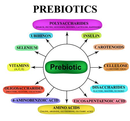 Substances prebiotics food for lactobacilli and bifidobacteria infographics vector illustration