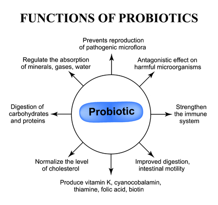 Functions of probiotics infographics vector illustration