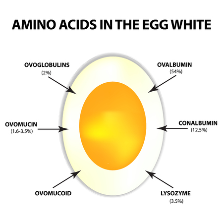 Amino acids in egg white. Infographics. Vector illustration on isolated background