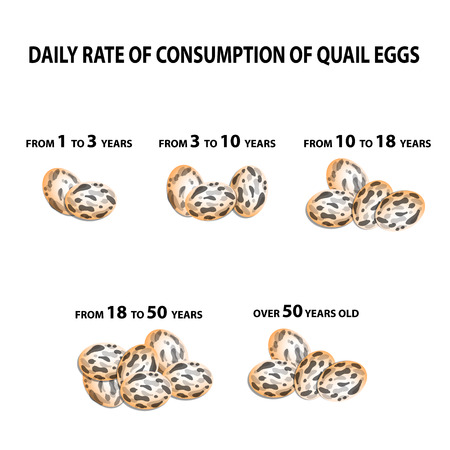 Norma eating quail eggs. Depending on the age. Infographics. Vector illustration on isolated background Ilustração