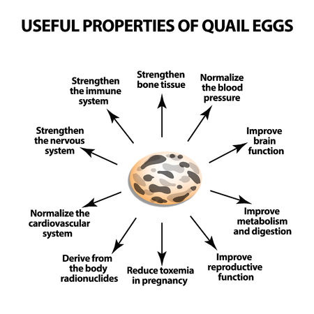 Useful properties of quail eggs, Infographics illustration on isolated background.