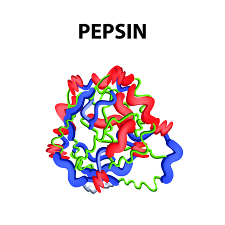 Pepsin is a molecular chemical formula. Enzyme of the stomach. Infographics. Vector illustration on an isolated background