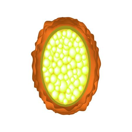 The egg of the roundworm unfertilized. Structure of Ascaris eggs. infographics. Vector illustration on isolated background