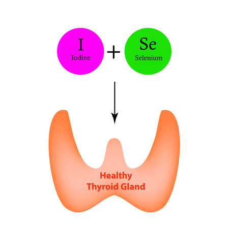 Selenium and Iodine are necessary for the normal functioning of the thyroid gland. Infographics. Vector illustration on isolated background