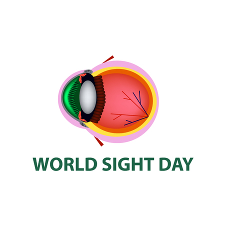 World Sight Day. October 11. Eye anatomical structure. Vector illustration on isolated background. Vector Illustration