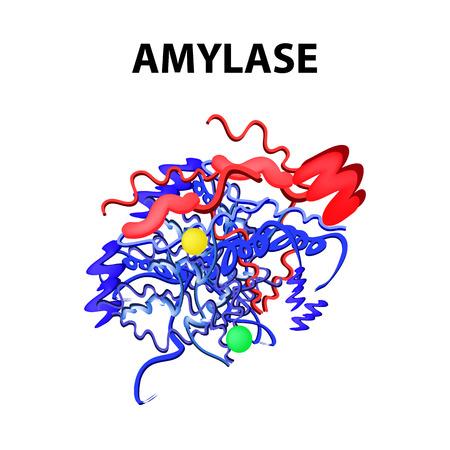 La amilasa es una fórmula química molecular. Enzima del páncreas. Infografía. Ilustración de vector sobre fondo aislado.