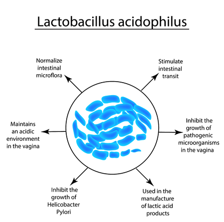 Useful properties of lactobacillus. Probiotic. Lactobacillus acidophilus. Infographics. Vector illustration on isolated background.