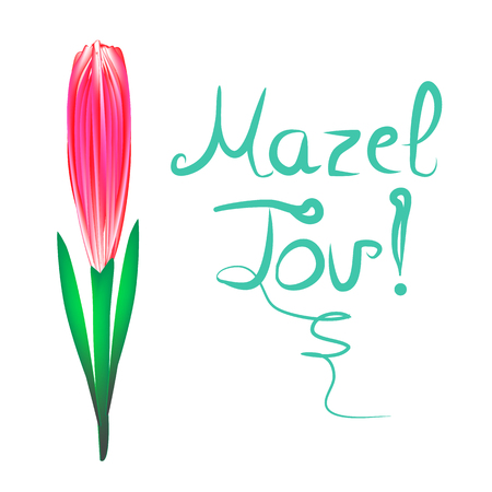 Greeting inscription Mazel Tov translated from Hebrew I wish you happiness. Tulip flower. Vector illustration on isolated background.
