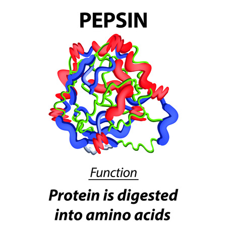 The molecular structural chemical formula of pepsin. Functions of the digestive tract enzyme pepsin. Turns proteins into amino acids. Infographics. Vector illustration on isolated background