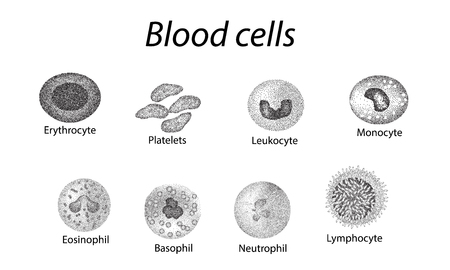 Blood cells. Set of monochrome cells. Red blood cells, platelets, leukocytes, lymphocytes, eosinophils, neutrophils, basophils monocytes Infographics Vector illustration on isolated background