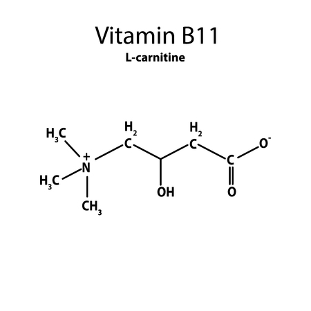 Vitamin B11. L-carnitine Molecular chemical formula. Infographics. Vector illustration on isolated background.
