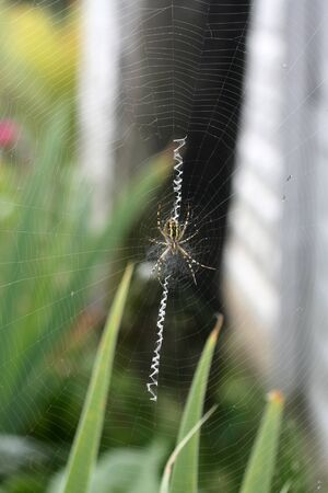 A spider is repairing a torn web. Latka on the web. Zdjęcie Seryjne