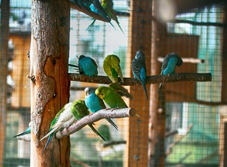 Parrots of different colors sit on branches.
