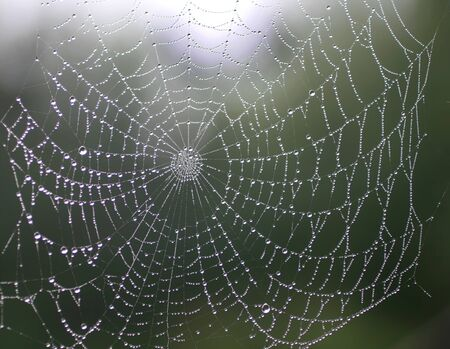 Beautiful spider web with dew drops. Shiny web.