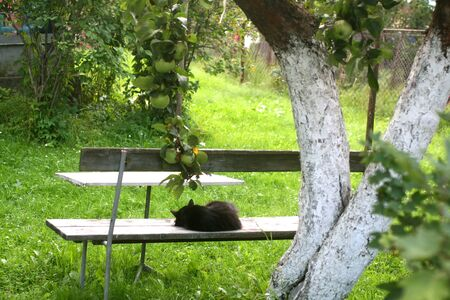 Black cat sleeps on a wooden bench.