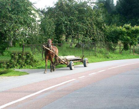 Cart drawn by a horse. Suburban Scenic Area. Фото со стока