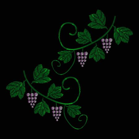 A vine with bunches of grapes. Embroidery of jeans. Embroidery is smooth. Vector illustration on a black background. Ilustração