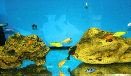 Aquarium with fish. Stones at the bottom of the aquarium