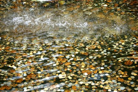 Different coins in the pond. Metal money in water