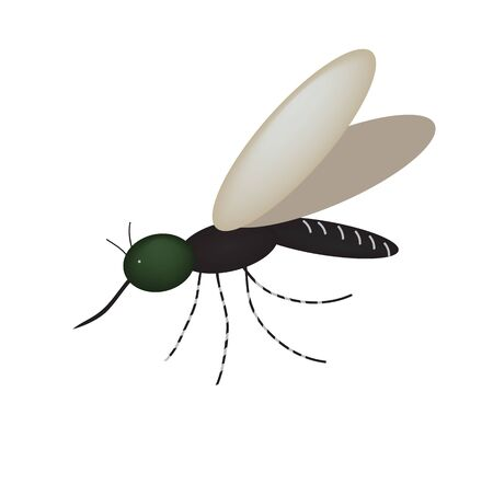 Mosquito. Insect sucking blood. Vector illustration on isolated background