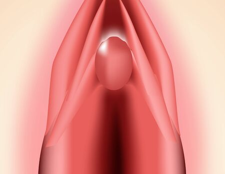 The structure of the vulva. The structure of the clitoris. Female genital organs. Hymen. Infographics. Vector illustration on isolated background.