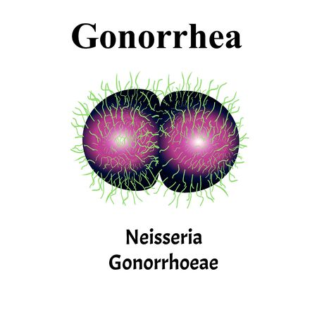 Gonococcus structure. Neisseria gonorrhoeae. Gonorrhea disease. Venereal disease. Infographics. Vector illustration on isolated background. Illusztráció