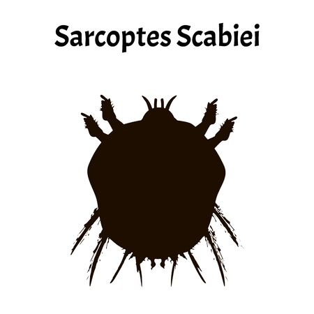 Sarcoptes scabiei. scabies. Sexually transmitted disease. Infographics. Vector illustration on isolated background.