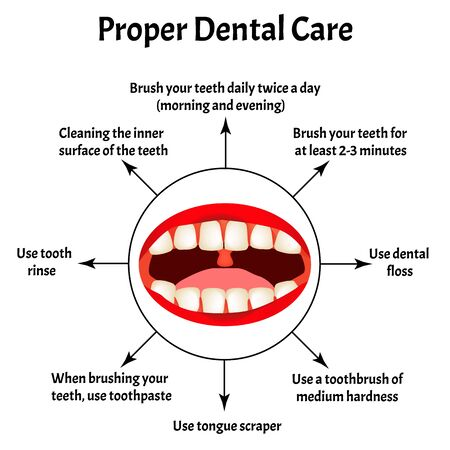 Proper dental care. International Dentist Day. The structure of the teeth and oral cavity. Diseases of the teeth. Infographics. Vector illustration on isolated background. Ilustração