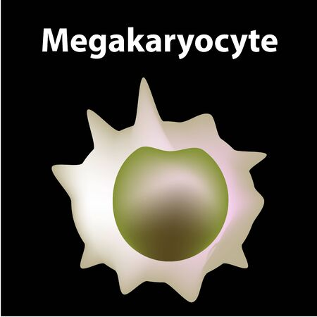 The structure of platelets. Platelets are a blood cell. myeloid, stem, cell, megakaryocyte, megakaryoblast. Infographics. Vector illustration on isolated background.