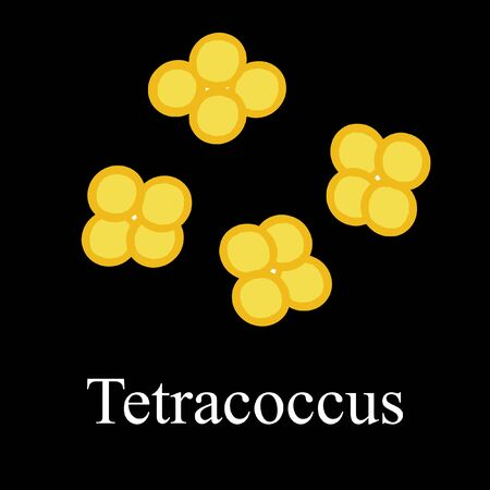Tetraccoci structure. Bacteria tetracoccus. Infographics. Vector illustration on isolated background.