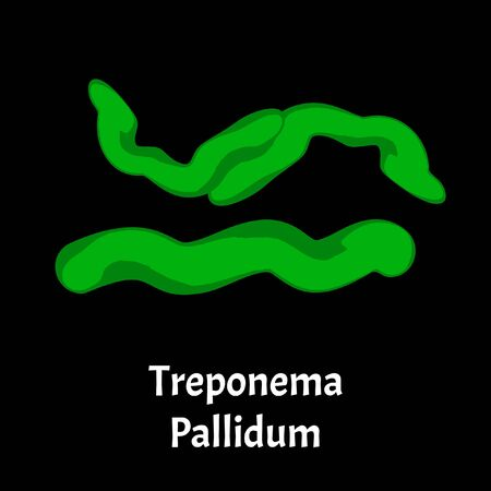 Syphilis. Treponema pallidum, Spirochaetaceae. Bacterial infections. Sexually transmitted diseases. Infographics. illustration on isolated background. Ilustração