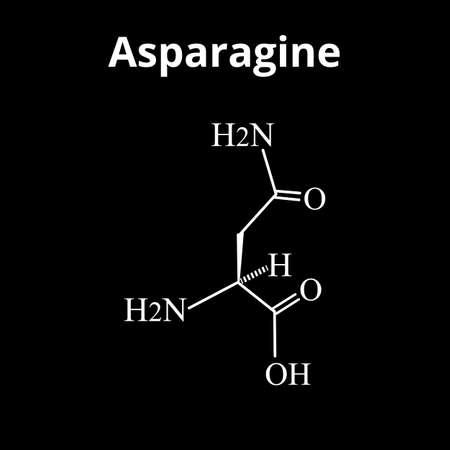 Asparagine is an amino acid. Chemical molecular formula Asparagine is amino acid. Vector illustration on isolated background