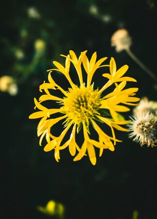 Flower looks desaturated but still looks amazing in dark theme