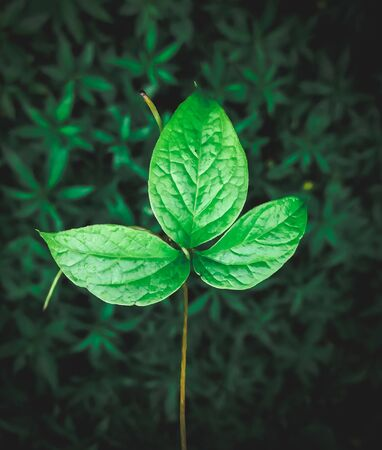 Green leaf in blurred background in stunning blurring effect Banque d'images