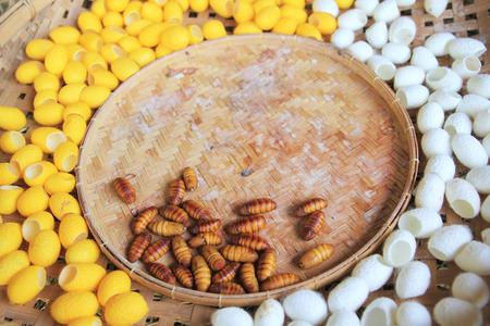 capullo: Amarillo capullo del gusano para el fondo Foto de archivo