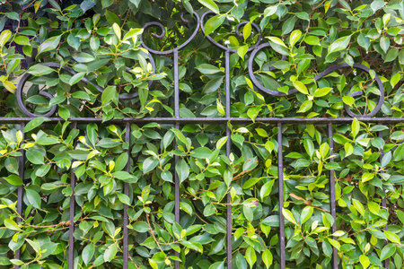 parapet wall: Tree leaf green background, fence wall house.