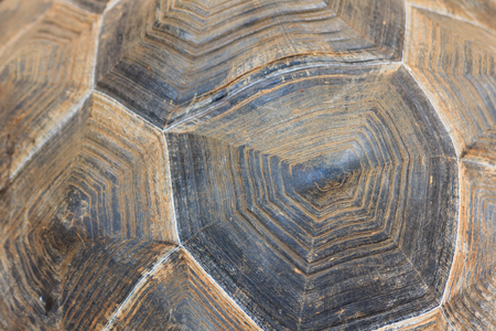 Close up giant turtle shell texture background. Stock Photo