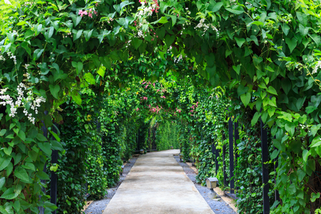 Beautiful footpath in the garden. The walk way with camber colorful flowers and trees background. Stock Photo