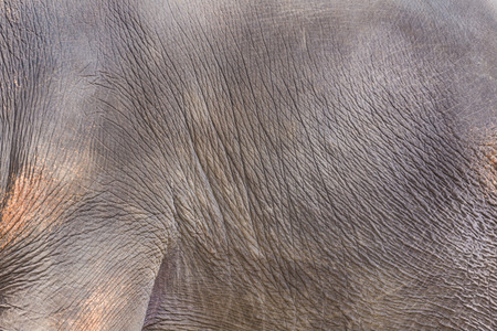 Close up skin elephant texture, animal background.