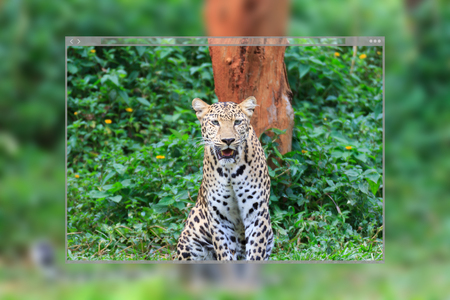 Web site page design concept, jaguar tiger siting in the nature background.