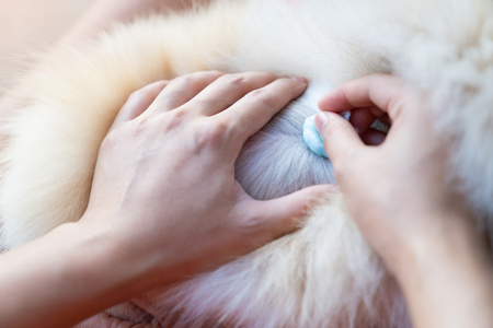 Close up hand doctor is help dog sick, in the hospital Stock Photo