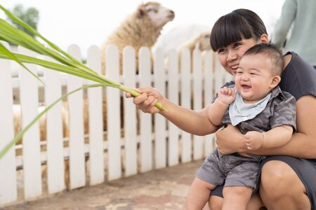 Asian beautiful mother is take care your cute new born baby boy feeding grass for sheep in the farm, Activities family to enhance the learning experience of children.