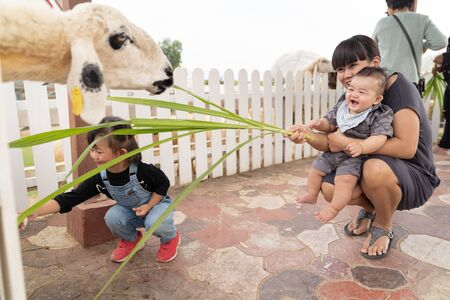 Asian beautiful mother is take care your baby boy and girl feeding grass for sheep in the farm, Activities family to enhance the learning experience of children.