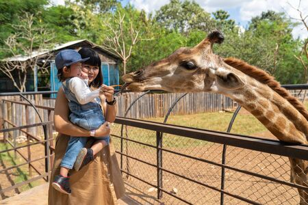 Asian cute baby girl feeding on your hand for big giraffe in animal farm background, summer vacation holiday travel, family life style concept. Foto de archivo - 128765083