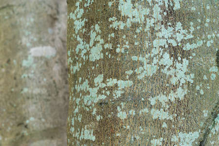 Close up. Natural root texture background material. Old Wood Tree Background Pattern. Dry tree bark. 版權商用圖片