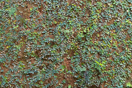 The pristine nature of Asia. Soil, mosses, and plants on the surface of the tropical. Nature wall texture, background image, close up. 版權商用圖片