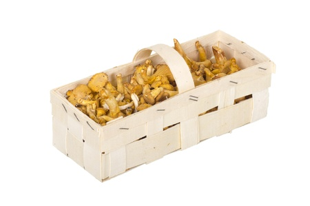 Golden Chanterelles in Wooden Box on white background