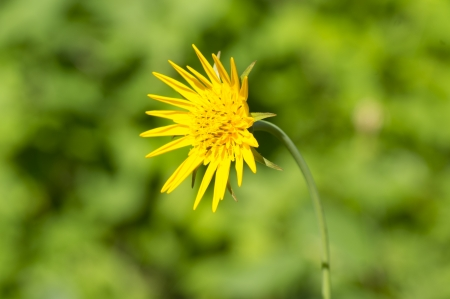 yellow flower in a meadow Stock Photo
