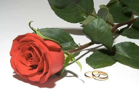 Wedding rings with one red rose