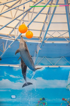 dolphins in dolphinariums jump high to the ball. Stock Photo